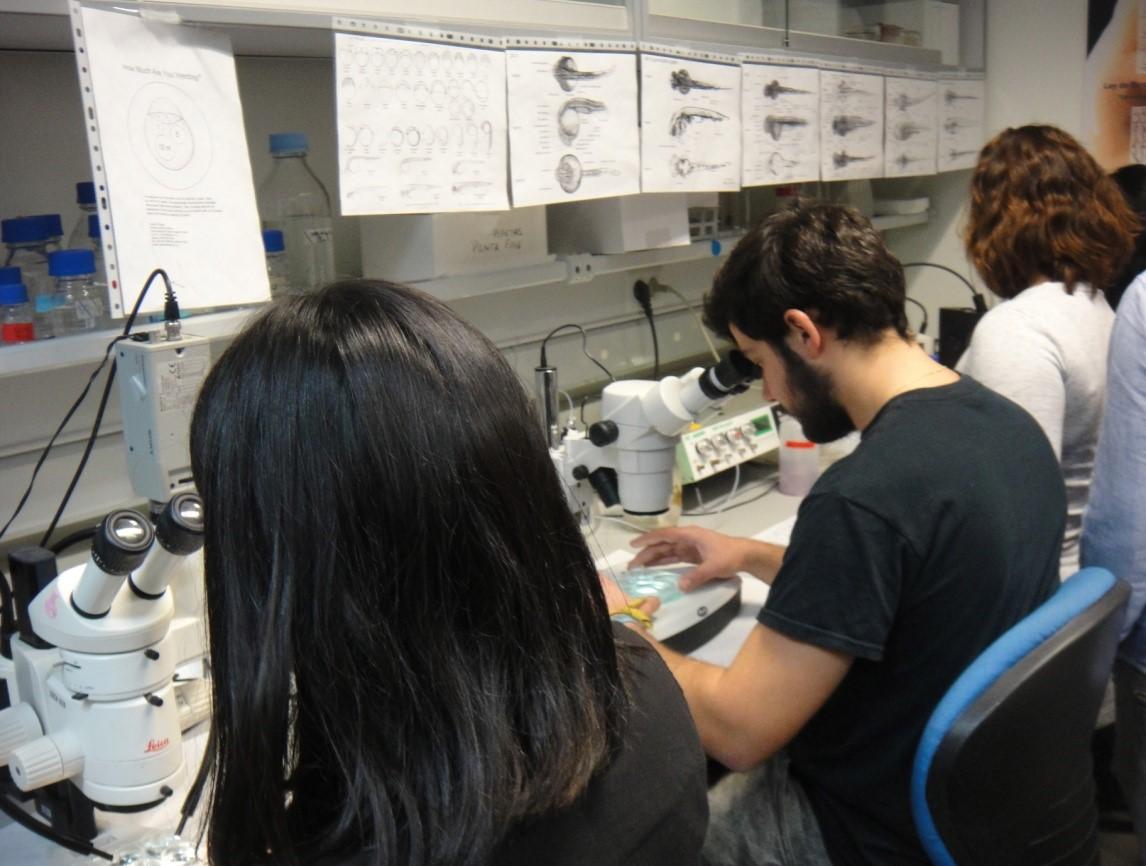 laboratorio12